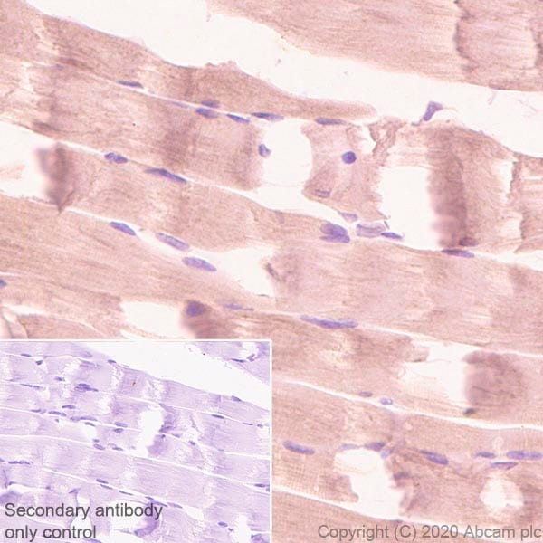 Immunohistochemistry (Formalin/PFA-fixed paraffin-embedded sections) - Anti-Aldolase antibody [EPR23181-39] (ab252953)