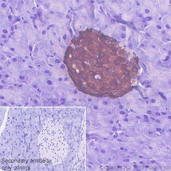 Immunohistochemistry (Formalin/PFA-fixed paraffin-embedded sections) - Anti-Amylin/DAP antibody [EPR22556-138] (ab254259)