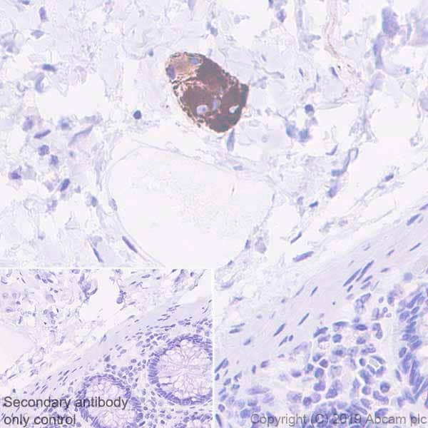 Immunohistochemistry (Formalin/PFA-fixed paraffin-embedded sections) - Anti-MAP2 antibody [EPR22641-106] (ab254263)