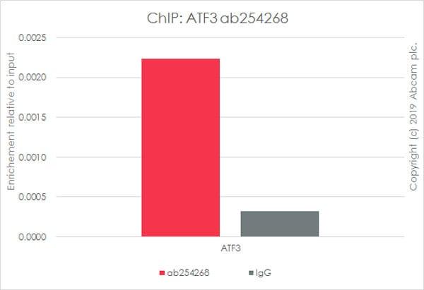 ChIP - Anti-ATF3 antibody [EPR22610-19] - ChIP Grade (ab254268)