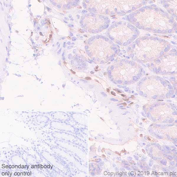 Immunohistochemistry (Formalin/PFA-fixed paraffin-embedded sections) - Anti-LMO2 antibody [EPR22404-45] - BSA and Azide free (ab254270)