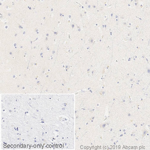 Immunohistochemistry (Formalin/PFA-fixed paraffin-embedded sections) - Anti-Tau Alzheimer's Disease antibody [GT-38] - BSA and Azide free (ab254274)