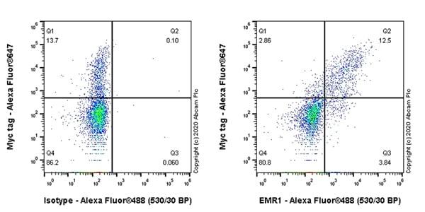 Flow Cytometry - Anti-EMR1/ADGRE1 antibody [EPR23225-94] (ab254293)