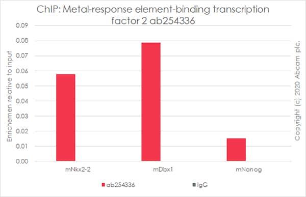ChIP - Anti-MTF2 antibody [EPR23536-87] (ab254336)