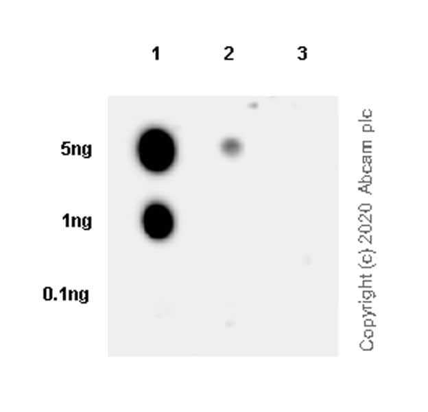 Dot Blot - Anti-Histone H3.3 (mutated G34R) antibody [EPR23519-91] - ChIP Grade (ab254402)