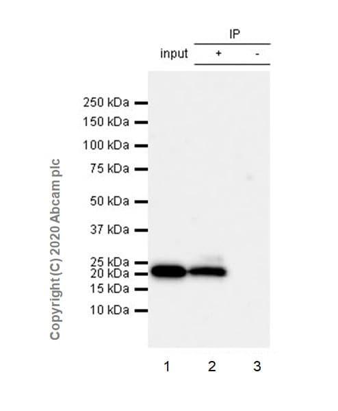 Immunoprecipitation - Anti-Histone H3.3 (mutated G34R) antibody [EPR23519-91] - ChIP Grade (ab254402)