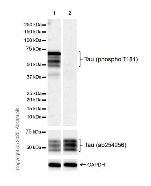 Western blot - Anti-Tau (phospho T181) antibody [EPR23506-107] (ab254409)