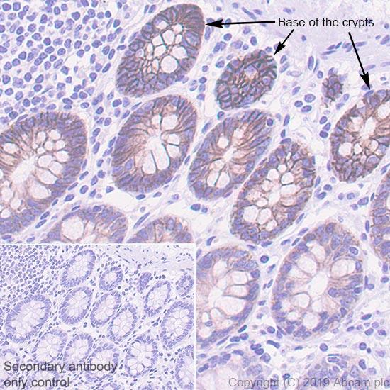 Immunohistochemistry (Formalin/PFA-fixed paraffin-embedded sections) - Anti-Eph receptor B2 antibody [EPR22427-268] - BSA and Azide free (ab255274)
