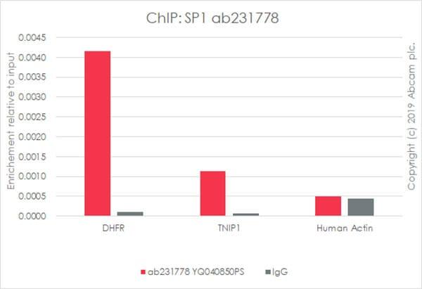 ChIP - Anti-SP1 antibody [EPR22648-50] - BSA and Azide free (ab255289)