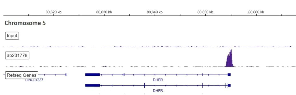 ChIP-sequencing - Anti-SP1 antibody [EPR22648-50] - BSA and Azide free (ab255289)