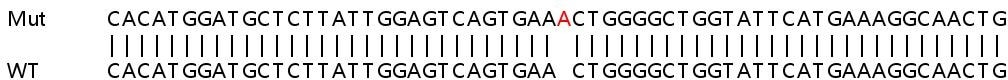 Sanger Sequencing - Human MSH6 knockout HeLa cell line (ab255410)