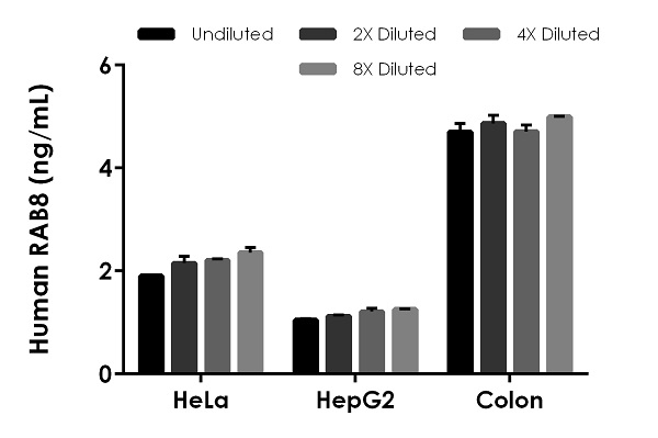 Interpolated concentrations of native RAB8 in human HeLa extract based on a 25 µg/mL extract, HepG2 cell extract based on a 50 µg/mL extract, and human colon extract based on a 250 µg/mL extract.