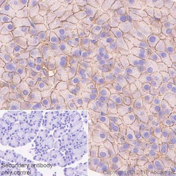 Immunohistochemistry (Formalin/PFA-fixed paraffin-embedded sections) - Anti-CASK antibody [K56A/50] - BSA and Azide free (ab255764)