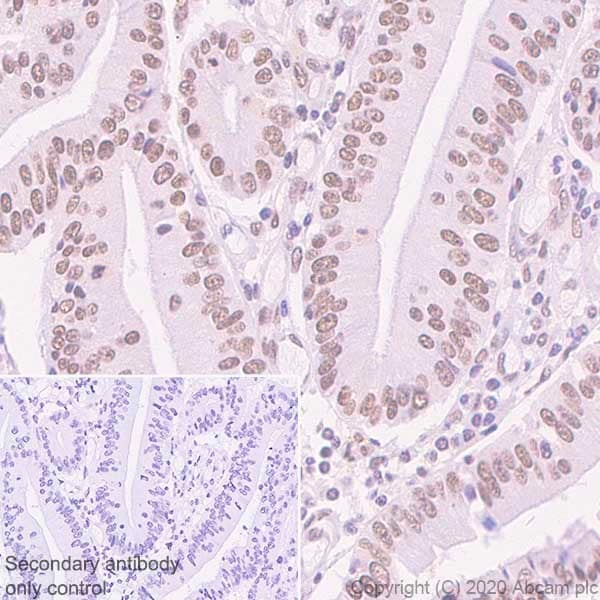 Immunohistochemistry (Formalin/PFA-fixed paraffin-embedded sections) - Anti-BRD7 antibody [2D3] - BSA and Azide free (ab255776)