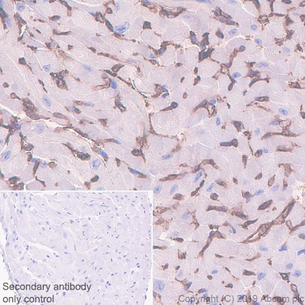 Immunohistochemistry (Formalin/PFA-fixed paraffin-embedded sections) - Anti-Sca1 / Ly6A/E antibody [EPR22502-68] - BSA and Azide free (ab255804)