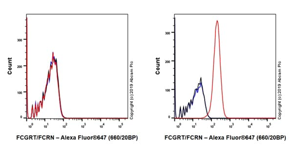 Flow Cytometry - Anti-FCGRT/FCRN antibody [EPR22627-25] - BSA and Azide free (ab256121)