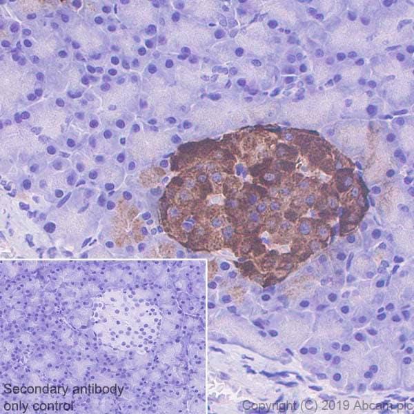 Immunohistochemistry (Formalin/PFA-fixed paraffin-embedded sections) - Anti-Chromogranin A antibody [EPR22537-249] - BSA and Azide free (ab256169)
