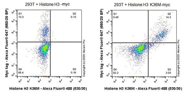 Flow Cytometry (Intracellular) - Anti-Histone H3 (mutated K36M) antibody [EPR23614-91] (ab256384)