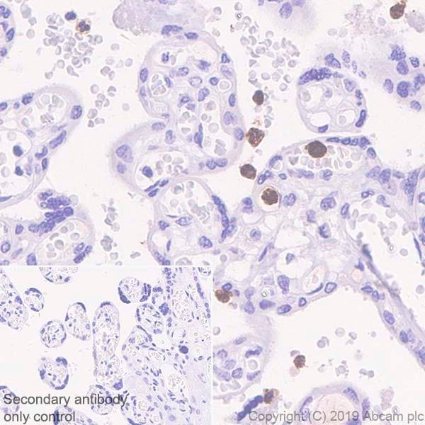 Immunohistochemistry (Formalin/PFA-fixed paraffin-embedded sections) - Anti-CD177 antibody [EPR22813-205] - BSA and Azide free (ab256510)