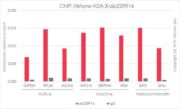 ChIP - Anti-Histone H2A.X antibody [EPR22820-23] - ChIP Grade – BSA and Azide free (ab256544)