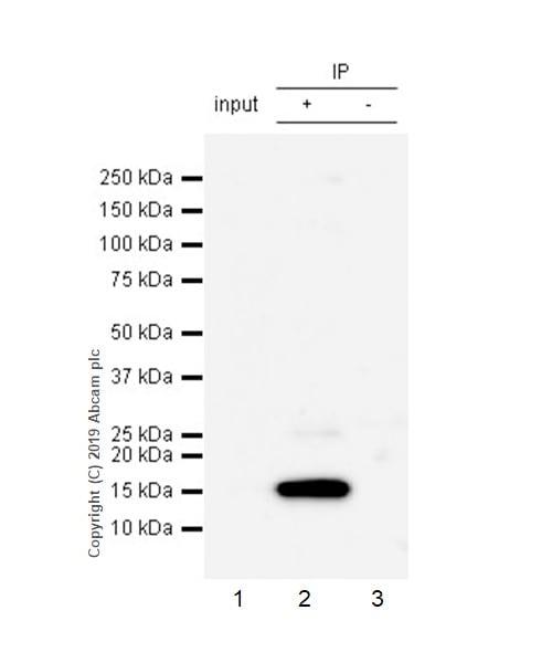 Immunoprecipitation - Anti-Histone H2A.X antibody [EPR22820-23] - ChIP Grade – BSA and Azide free (ab256544)