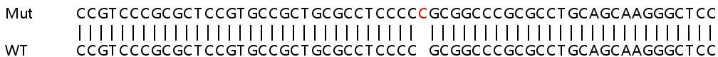 Sanger Sequencing - Human PPIF knockout HEK293T cell lysate (ab257039)