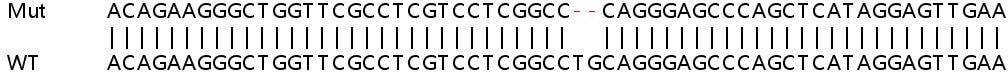 Sanger Sequencing - Human PRKCD knockout HEK293T cell lysate (ab257042)