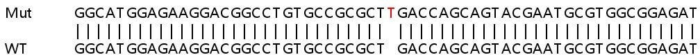 Sanger Sequencing - Human CDK6 knockout HeLa cell lysate (ab257088)