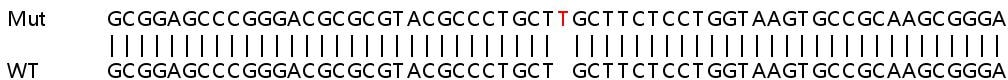 Sanger Sequencing - Human DSG2 knockout HeLa cell lysate (ab257158)