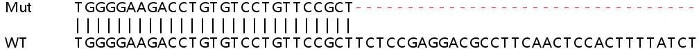 Sanger Sequencing - Human RAB8A knockout HeLa cell lysate (ab257195)