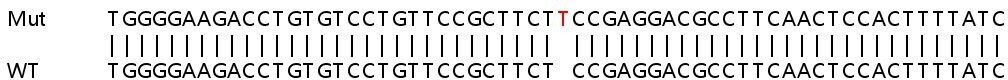 Sanger Sequencing - Human RAB8A knockout HeLa cell lysate (ab257196)