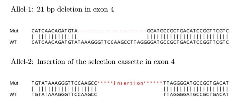 Sanger Sequencing - Human TIMP1 knockout HeLa cell lysate (ab257291)
