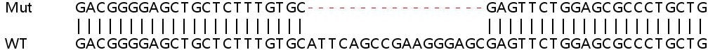 Sanger Sequencing - Human CAPN2 knockout HEK293T cell lysate (ab257379)