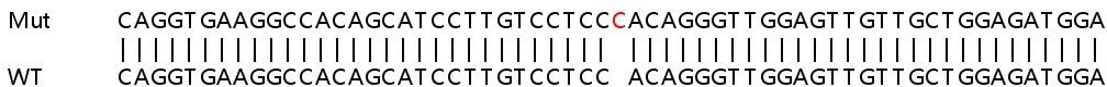 Sanger Sequencing - Human CEACAM1 knockout A549 cell lysate (ab257388)