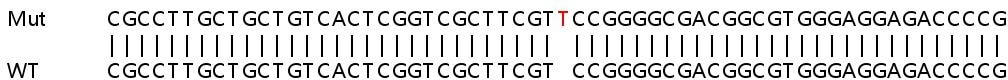 Sanger Sequencing - Human LMAN1 knockout HEK293T cell lysate (ab257505)