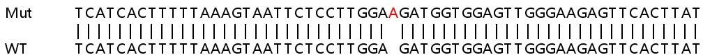 Sanger Sequencing - Human RAB9A knockout HeLa cell lysate (ab257625)
