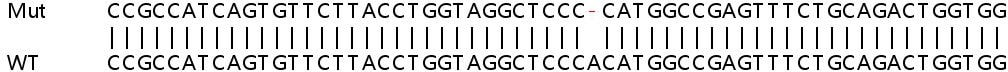 Sanger Sequencing - Human SESN2 knockout HeLa cell lysate (ab257665)