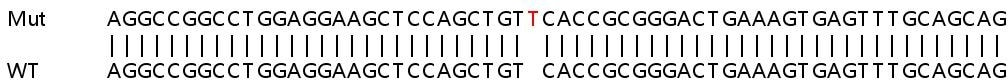 Sanger Sequencing - Human TNFSF13B knockout A549 cell lysate (ab257753)