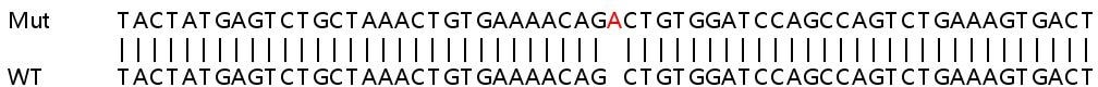 Sanger Sequencing - Human TRAF6 knockout HeLa cell lysate (ab257760)
