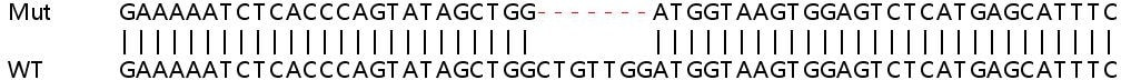 Sanger Sequencing - Human AK3 knockout HEK293T cell lysate (ab257826)