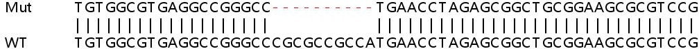 Sanger Sequencing - Human CDC16 knockout HEK293T cell lysate (ab257881)