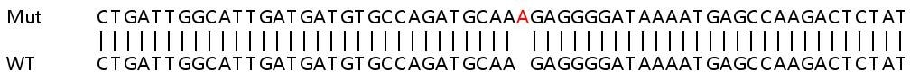 Sanger Sequencing - Human DAB2 knockout HeLa cell lysate (ab257910)