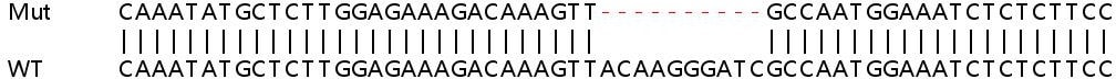 Sanger Sequencing - Human LTA4H knockout HEK293T cell lysate (ab258034)