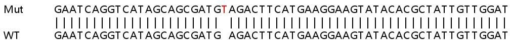 Sanger Sequencing - Human PRKAG1 knockout HEK293T cell lysate (ab258138)
