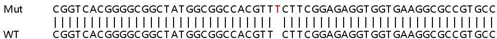 Sanger Sequencing - Human PSMG1 knockout HEK293T cell lysate (ab258149)