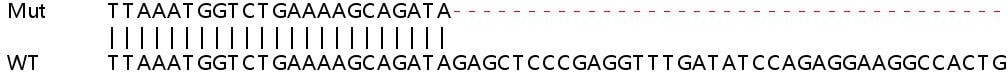 Sanger Sequencing - Human RBPMS knockout HeLa cell lysate (ab258631)