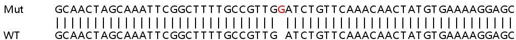 Sanger Sequencing - Human SERPINB5 knockout HeLa cell lysate (ab258659)