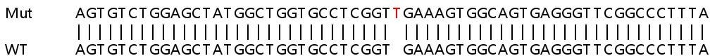 Sanger Sequencing - Human KIF1C knockout HEK293T cell lysate (ab258932)