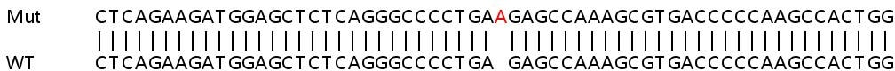 Sanger Sequencing - Human SLC41A3 knockout HEK293T cell lysate (ab259134)