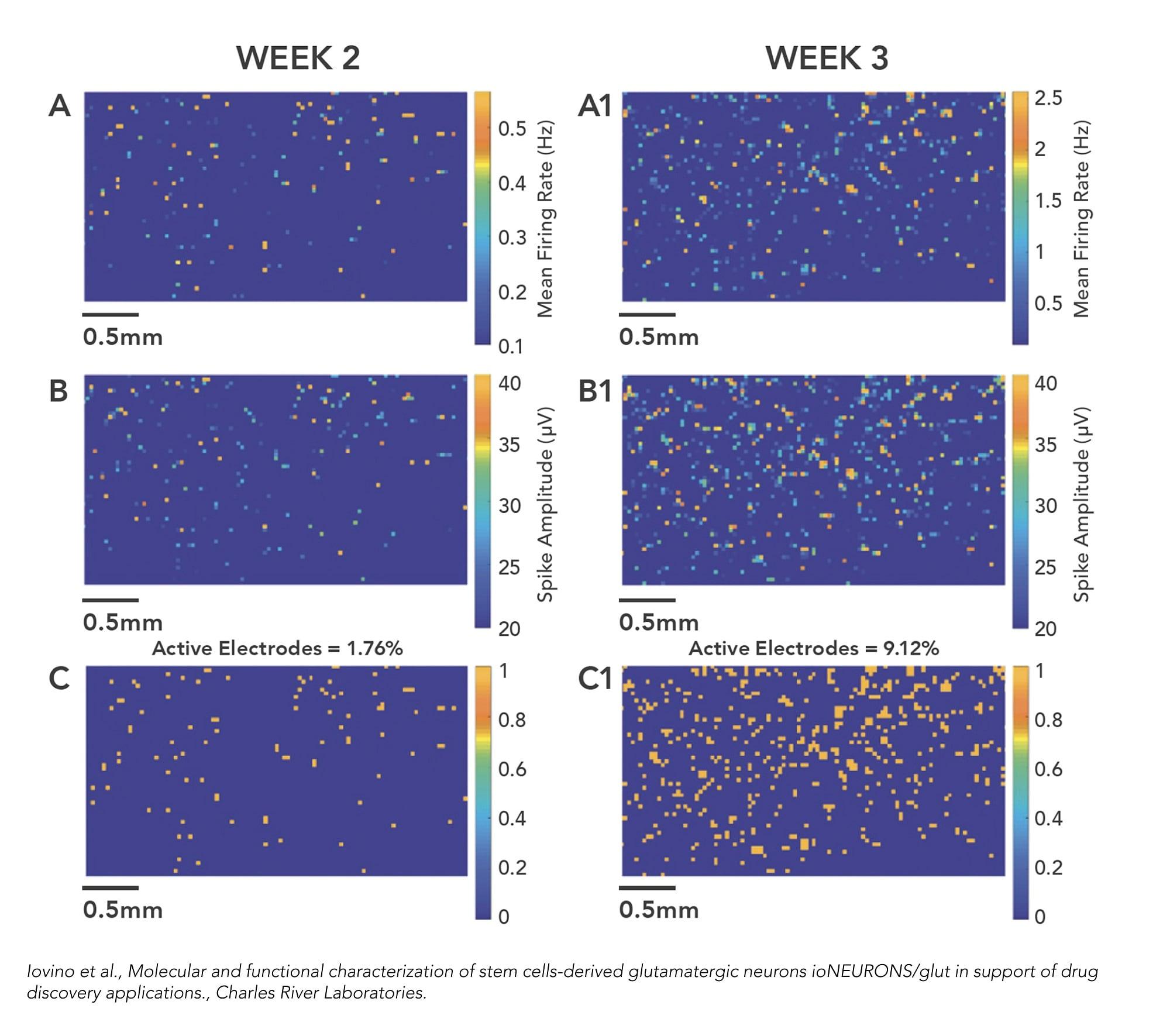 功能研究-神经内分泌神经元–人iPSC衍生谷氨酸能神经元(ab259259)